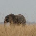 elephantsheader.jpg
